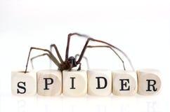 Spider on the wood blocks Stock Photos