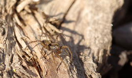Spider on wood. In sunlight Stock Images