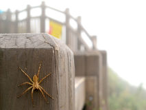 Spider on wooden railing. Yellow-Blown spider is climbing on wooden railing Royalty Free Stock Photo