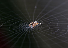 Spider working on her web. In the morning royalty free stock image