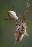 Spider after wrapping hopper Stock Images