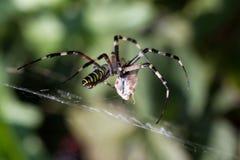 Spider wrapping hopper Stock Photos