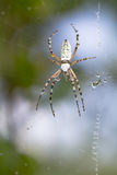 Spider wrapping hopper Royalty Free Stock Photos
