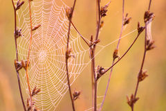 Spiders Web In Autumn Stock Images