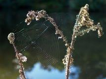 Spider's Webs Stock Photo
