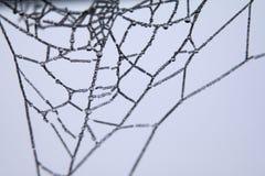 Spider's web  Stock Photo
