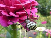 Spider Zerbe Stock Images