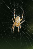 Spider3 Stock Images