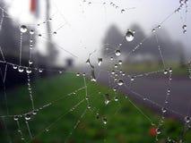 spidernet Royaltyfri Fotografi