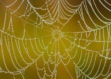 Spidernet Immagini Stock Libere da Diritti