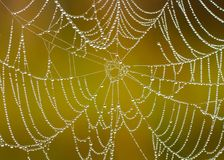 Spidernet. Royalty Free Stock Images