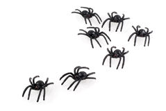Spiders. Stock Image