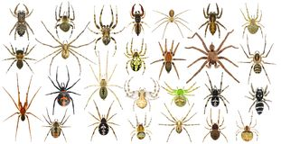 Free Spiders Royalty Free Stock Images - 124551719