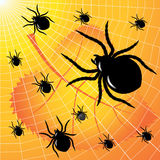 Spiders Stock Photos