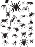 Spiders. Collection of spiders. Vector illustration Stock Photography