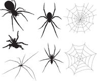 Spiders. Unique custom hand drawn vector spiders that are totally awesome Vector Illustration