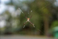 Spiders on bokeh background.  Stock Photos