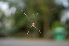 Spiders on bokeh background. Spiders on bokeh background Royalty Free Stock Image