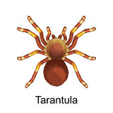 Spiders cartoon set, dangerous insects collection Stock Photos