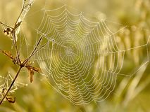 Spiders cobweb on a meadow at sunrise Stock Images