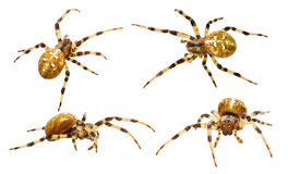 Spiders collection Royalty Free Stock Photo
