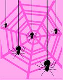 Spiders on colorful background Stock Photos