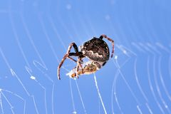 Spiders cross Royalty Free Stock Images