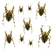 Spiders with a cross Stock Images