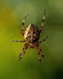 Spiders with a cross Royalty Free Stock Photos