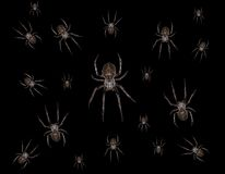 Spiders Stock Photography
