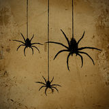 Spiders Stock Image