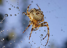 Spiders in the nature Stock Photo