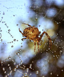 Spiders in the nature Stock Image