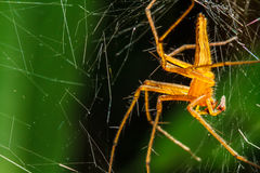 Spiders in the nest Stock Photography