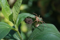 Spiders nest Royalty Free Stock Photography