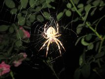 Benefit of the people of spiders stock photo