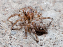 Spiders on the road royalty free stock photography