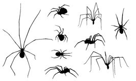 Spiders Stock Photo