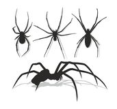 Spiders. Royalty Free Stock Photography
