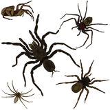 Spiders set Royalty Free Stock Photos