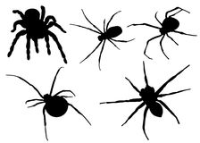 Spiders silhouette Stock Images