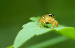 Spiders Stock Images