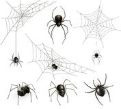 Spiders and spider web. Vector illustration Royalty Free Stock Photography