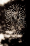 Spiders web. A spider's web covered in dew drops Stock Photography