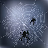 Spiders and web Royalty Free Stock Photos