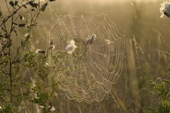 Spiders Web. A spiders web covered in water droplets on a misty morning Royalty Free Stock Photography