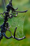 Spiders web. Detail of dew on spiders web Stock Photo