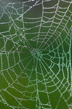 Spiders web. Detail of dew on spiders web Royalty Free Stock Photography