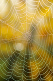 Spiders web. Detail of dew on spiders web Stock Images