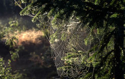 Spiders web. Closeup of spiders web in countryside Stock Photo